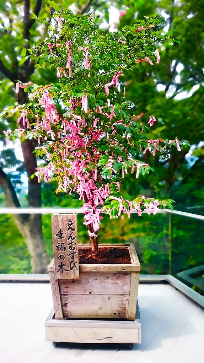久留米の結婚相談所ラフターマリッジ えんむすび幸福の木